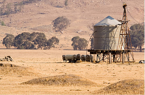 Sheep near tank and trough.png