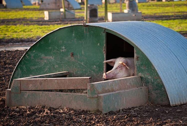 Tin Pig Hut.jpg