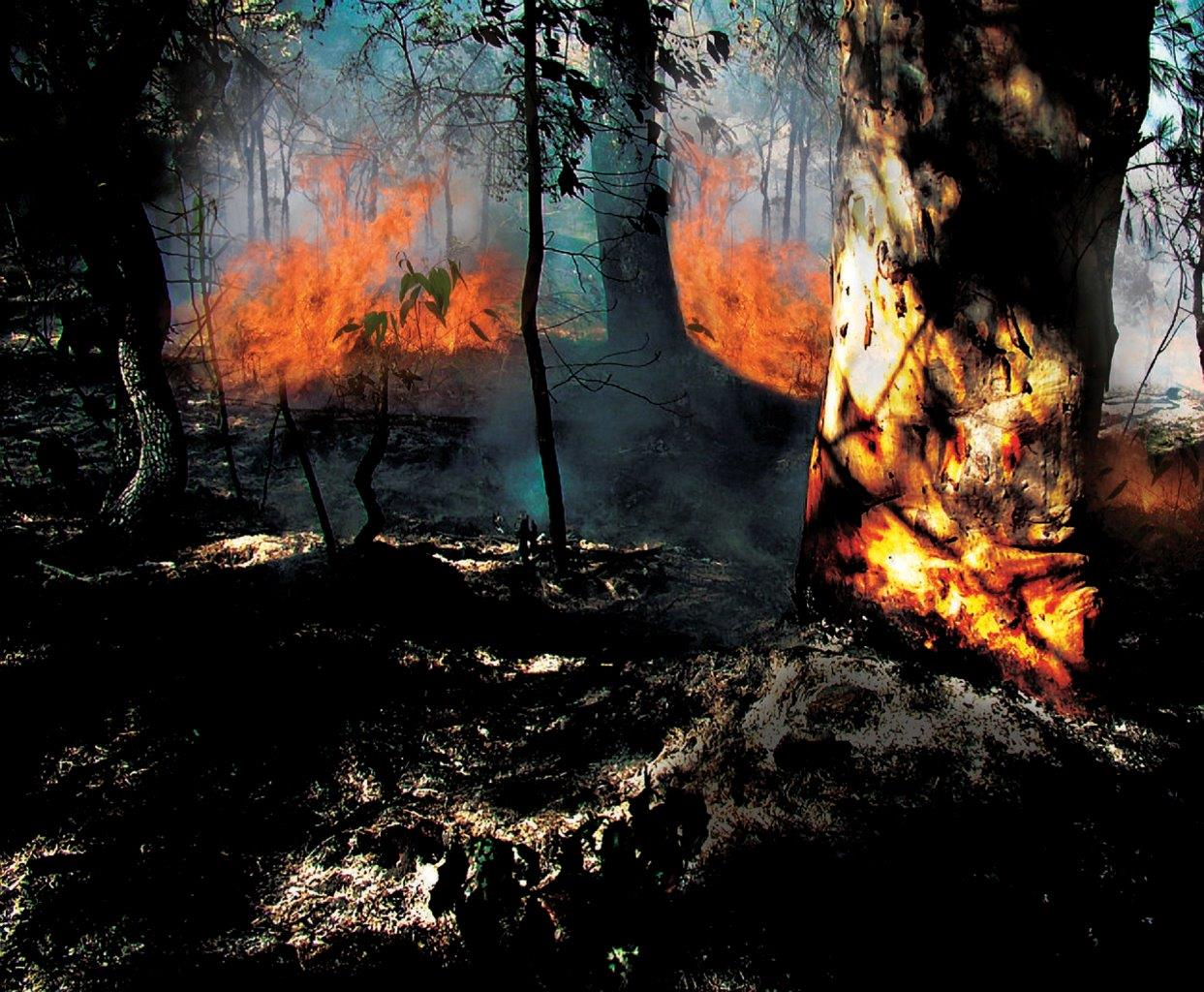 Bush-Fire_HRes.jpg