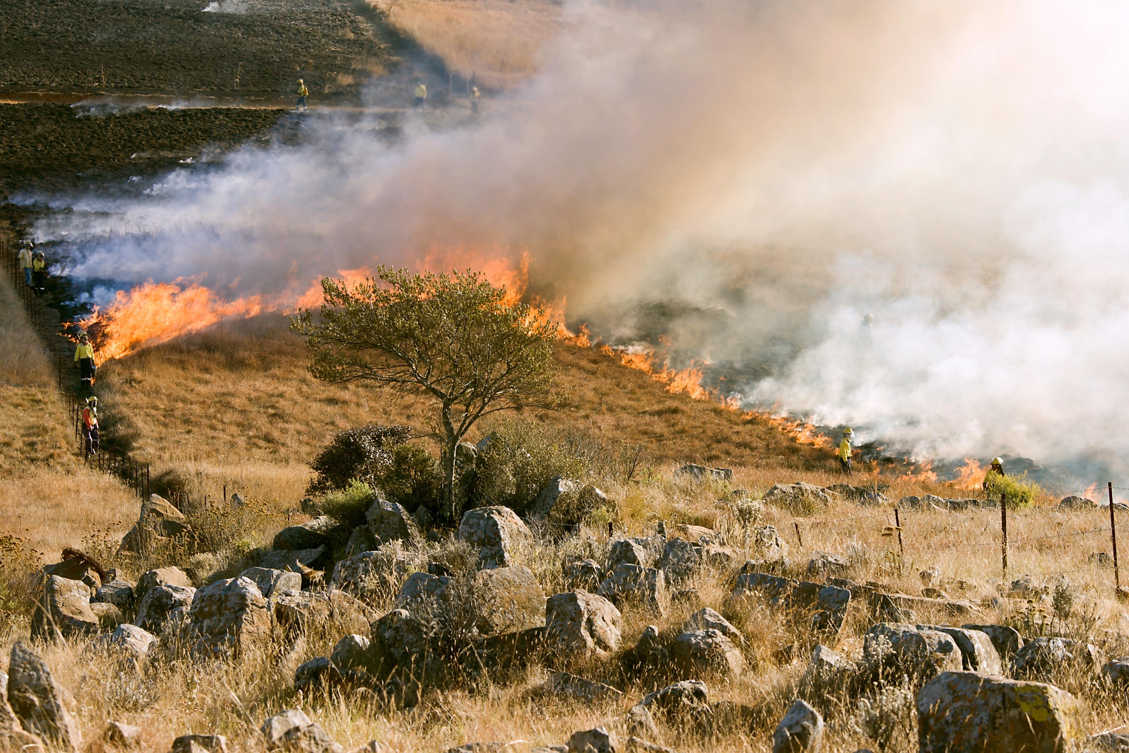 grass-fire-807388.jpg