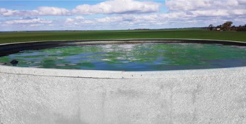 Algae growing in water tank-1