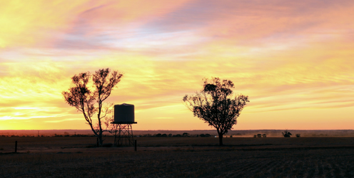 How Rainwater Tanks Can Help Your Farm