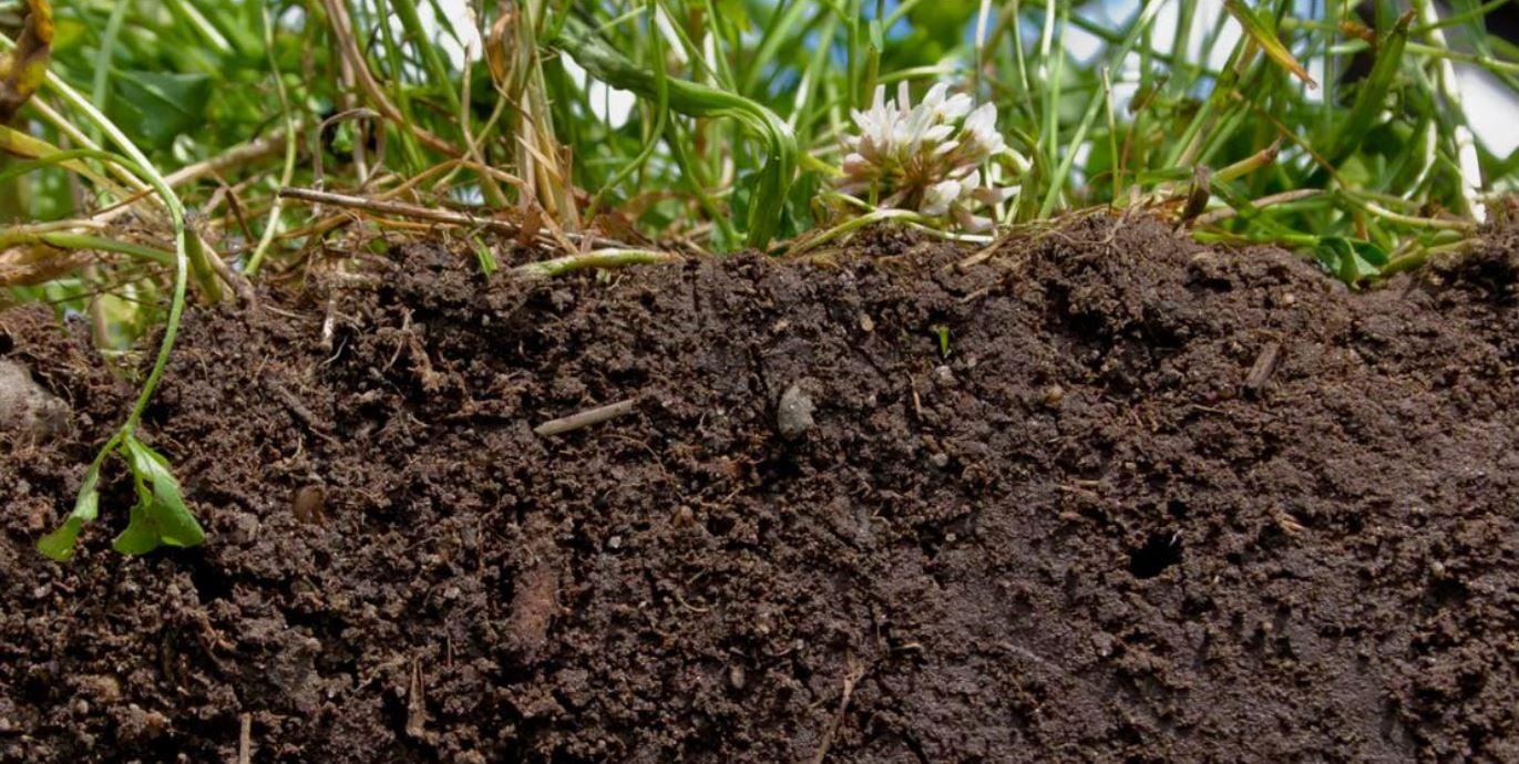 healthy farm soil